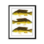 Brownspot Largemouth Cichlid Framed Panel Print