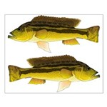 Brownspot Largemouth Cichlid Posters