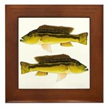 Brownspot Largemouth Cichlid Framed Tile