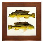 Brownspot Largemouth Cichlid Framed Tile