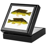 Brownspot Largemouth Cichlid Keepsake Box