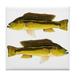 Brownspot Largemouth Cichlid Tile Coaster