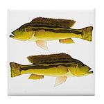 Brownspot Largemouth Cichlid Tile Coaster