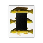 Brownspot Largemouth Cichlid Picture Frame