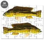 Brownspot Largemouth Cichlid Puzzle