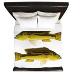Brownspot Largemouth Cichlid King Duvet