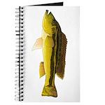 Brownspot Largemouth Cichlid Journal