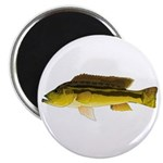 Brownspot Largemouth Cichlid Magnets