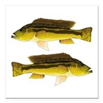 Brownspot Largemouth Cichlid Square Car Magnet 3