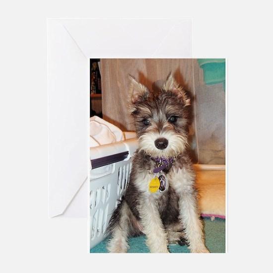 Schnauzer Puppy Greeting Cards