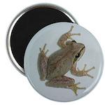 Pacific Treefrog Magnet