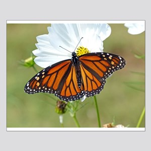 Monarch Butterfly on Cosmos Posters