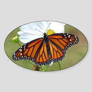 Monarch Butterfly on Cosmos Sticker