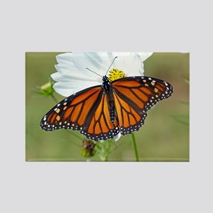Monarch Butterfly on Cosmos Magnets