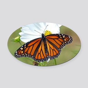Monarch Butterfly on Cosmos Oval Car Magnet