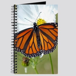 Monarch Butterfly on Cosmos Journal