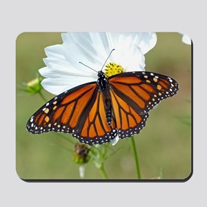 Monarch Butterfly on Cosmos Mousepad