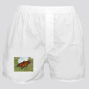 Monarch Butterfly on Cosmos Boxer Shorts