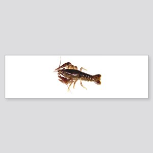 Crayfish 1 Bumper Sticker