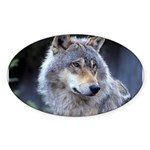 Gray Wolf Oval Sticker