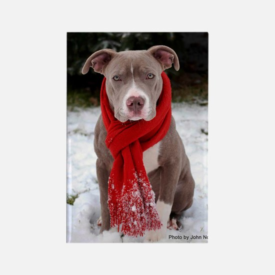 Holiday Pit Bull Magnets