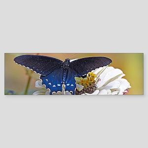 Spicebush Swallowtail Bumper Sticker