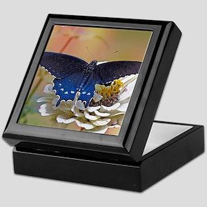 Spicebush Swallowtail Keepsake Box