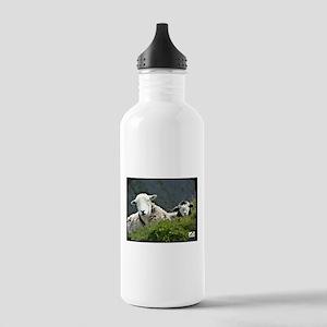 Herdwick Ewe & Lamb Sports Water Bottle