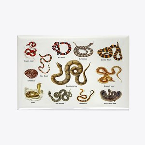 snakes Magnets