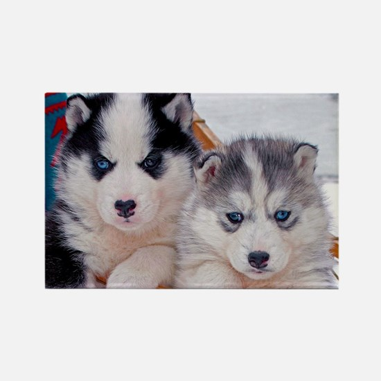 Husky Puppies in sled Magnets