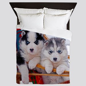 Husky Puppies in sled Queen Duvet