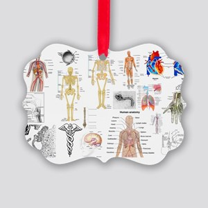 Human Anatomy Charts Ornament