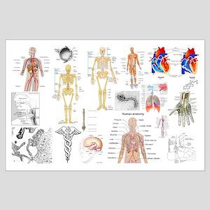 Human Anatomy Charts Posters