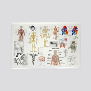 Human Anatomy Charts Magnets