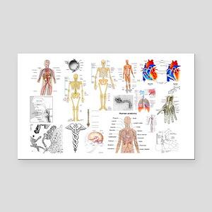 Human Anatomy Charts Rectangle Car Magnet