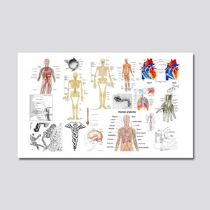 Human Anatomy Charts Car Magnet 20 x 12