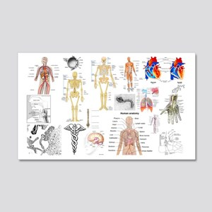Human Anatomy Charts Wall Decal