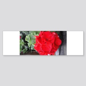 red geranium Bumper Sticker
