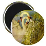 SWANS, Vintage art Print Magnets