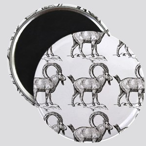 bunch of ibex Magnets