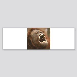 Orangutan with open mouth Bumper Sticker