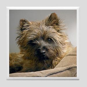 Pensive Cairn Terrier Tile Coaster