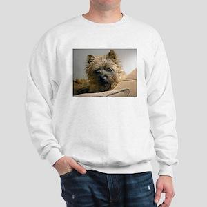 Pensive Cairn Terrier Sweatshirt