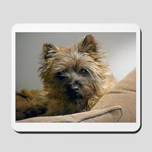 Pensive Cairn Terrier Mousepad