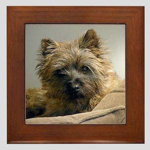 Pensive Cairn Terrier Framed Tile