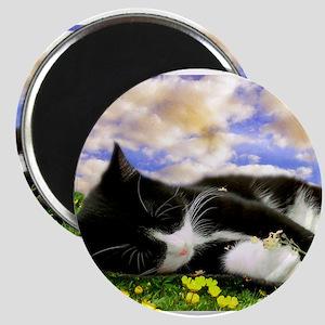 Tuxedo Kitty Magnets