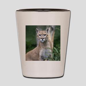 Mountain Lion Shot Glass