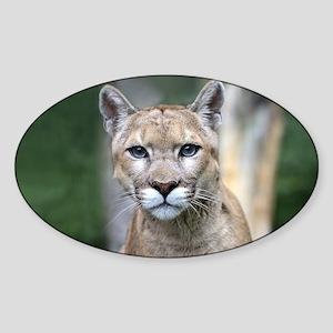 Mountain Lion Sticker (Oval)
