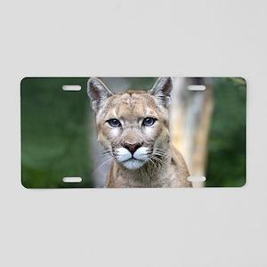 Mountain Lion Aluminum License Plate