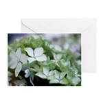 White Hydrangea Photograph Greeting Card